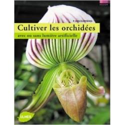 Cultiver les orchidées avec ou sans lumière artificielle