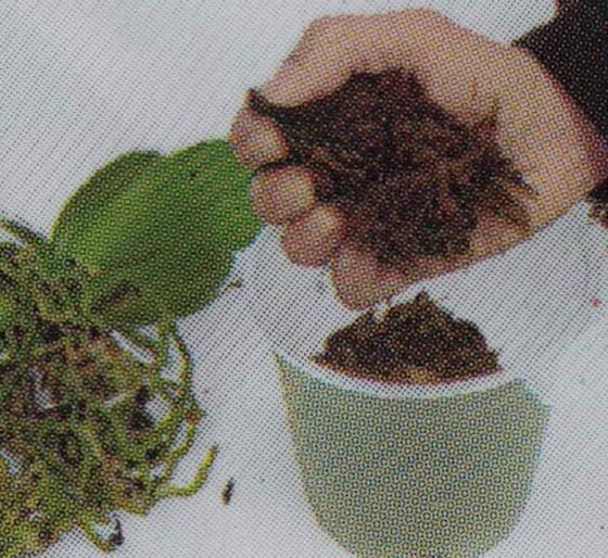 substrat pour orchidée orchid focus repotting