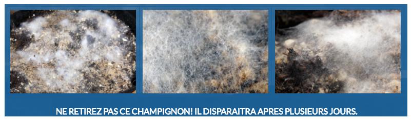 Biogrow Powder Feeding champignons mycé