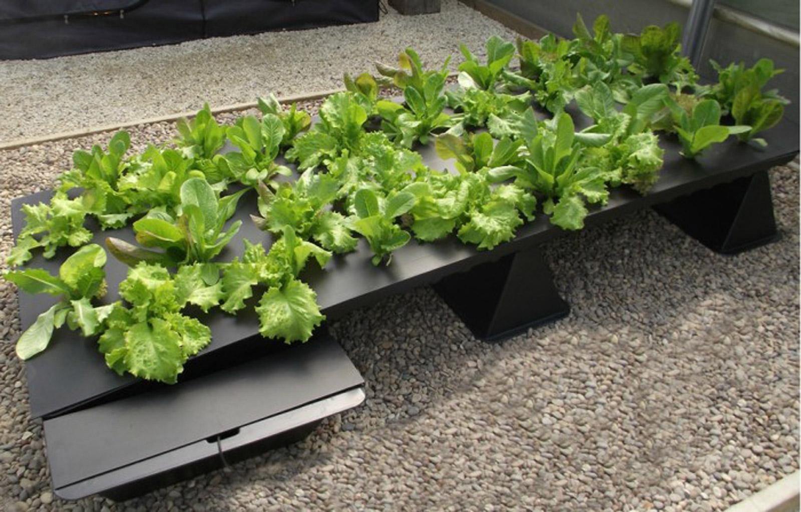 Plaque PVC noire pour système hydroponique Nutriculture