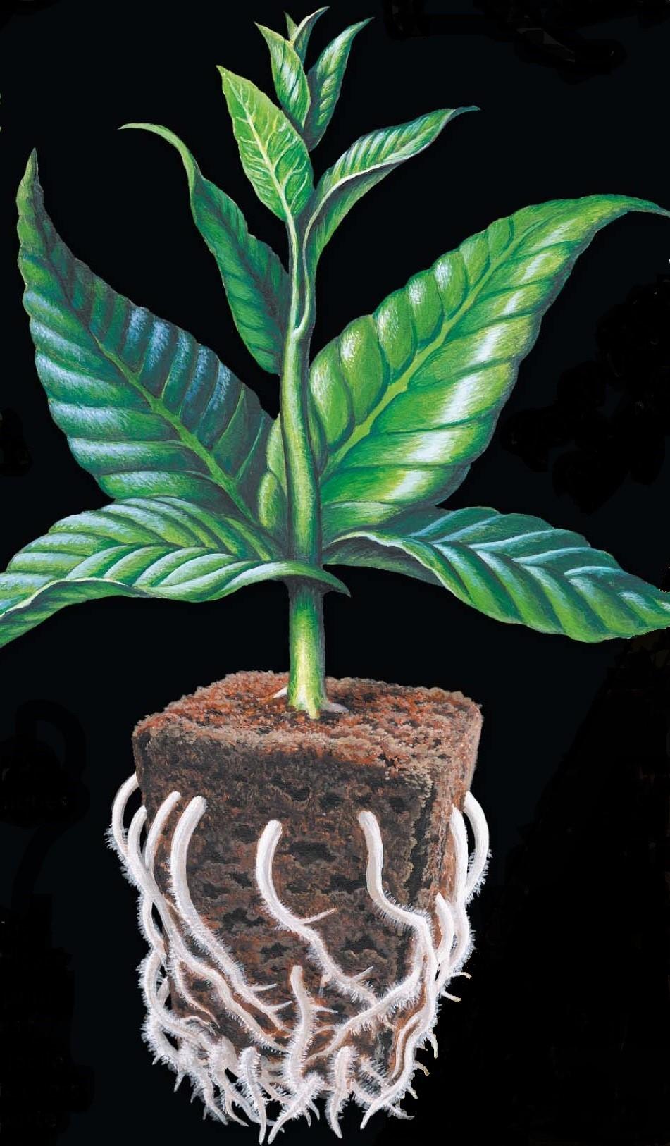 Cubes Root Riot vendus en sac de 100 pièces Growth Technology