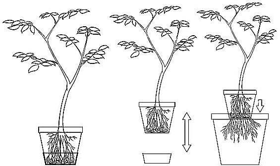Pot de rempotage pour semis et bouture